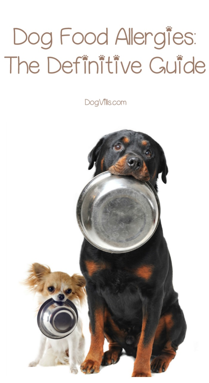 Dog Food For Dogs Allergic To Everything