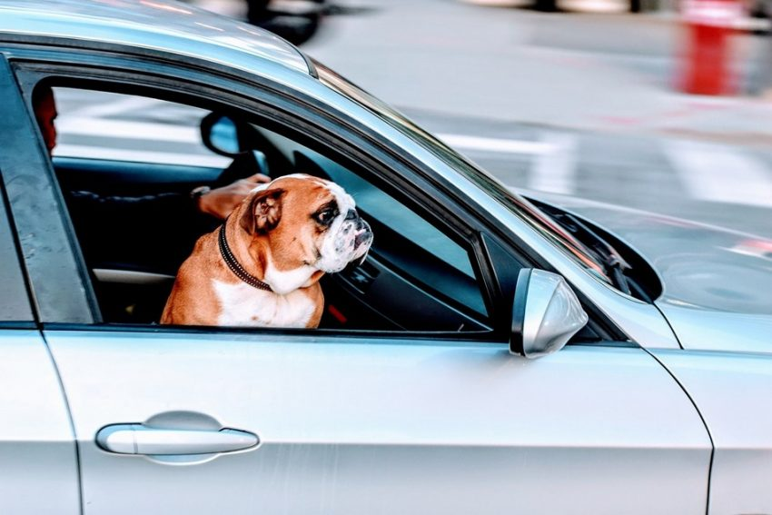 Traveling with a dog can be a great experience! However, you must be prepared for this adventure and be aware of all the problems that can arise. That is why we have prepared tips for traveling with a dog for you. Check them out!