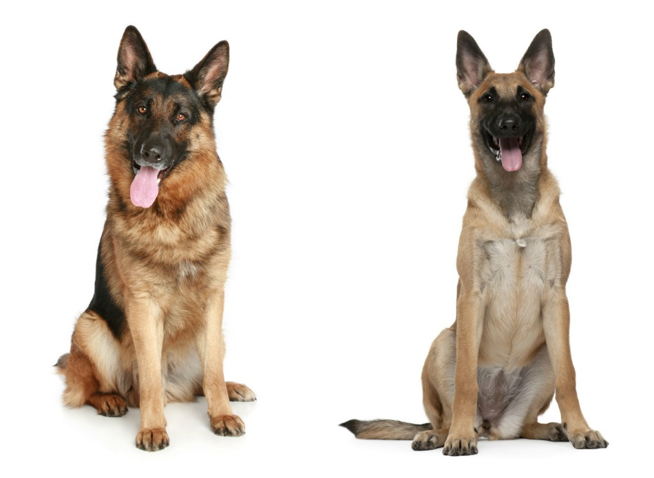 Hypoallergenic Dog Food For German Shepherds