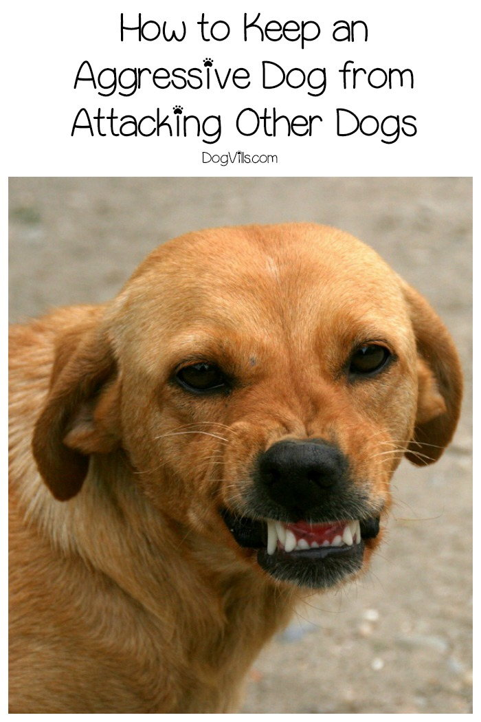How to Keep an Aggressive Dog from Attacking Other Animals