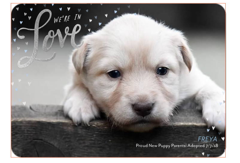 10 Adorable New Puppy Announcement Ideas Dogvills