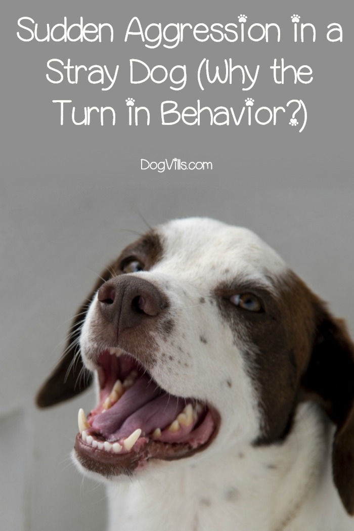 Sudden Aggression in a Stray Dog (Why the Turn in Behavior?)