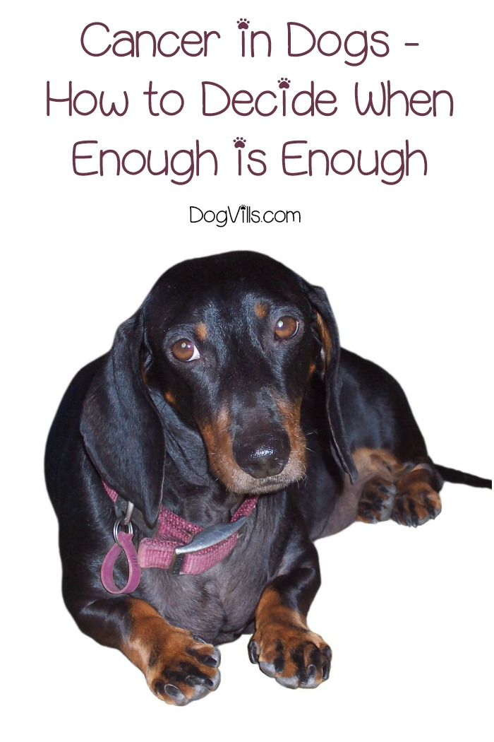 Cancer in Dogs – How to Decide When Enough is Enough