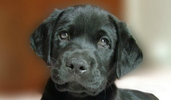 Do dogs remember their owners? If you're planning a trip, a deployment, or have to spend time away from your pooch for other reasons, you'll want to check out the answer!