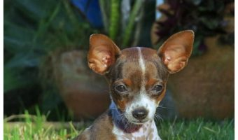 What to Do If Your Dog Eats Bugs