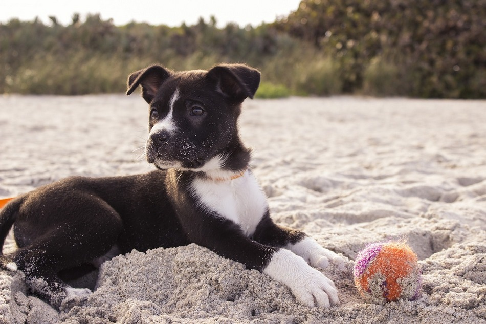 Want to plan your vacation to one of the top dog-friendly beaches in the U.S.? We're here to help! These beaches allow your dog to run in the sand, splash in the water and take in the warm sunshine. Check them out!