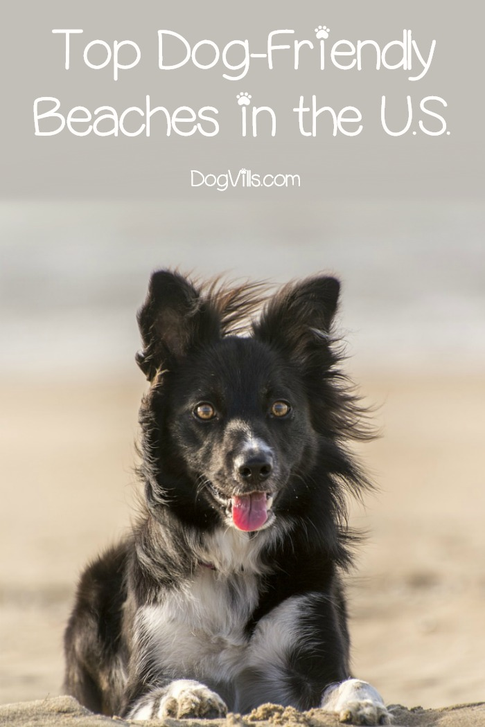 Top 31 REAL Dog-Friendly Beaches in the U.S.