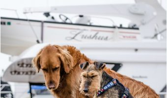Top 10 Dog-Friendly Cruises to Take With Fido