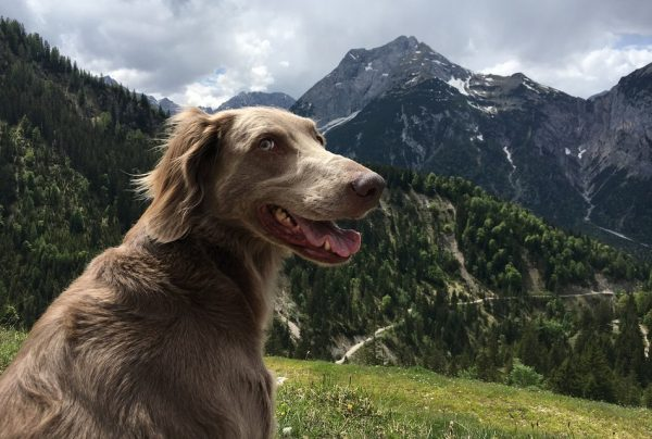If you love the idea of hiking with your dog or spending time outdoors, these female nature dog names are perfect for you!