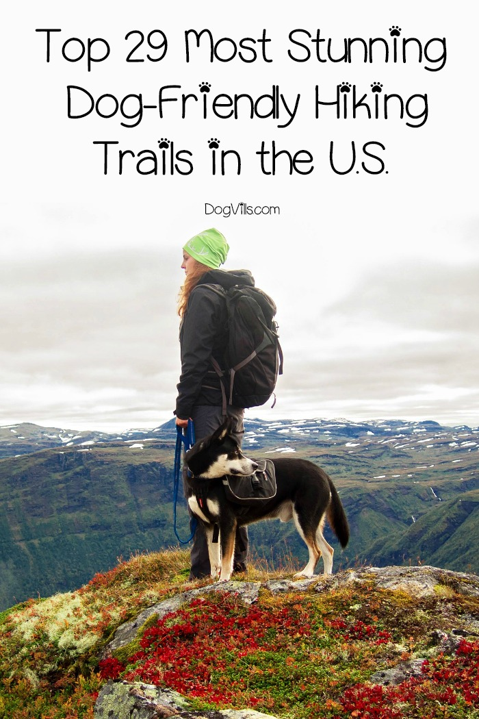 29 Stunning Dog-Friendly Hiking Trails in the U.S.
