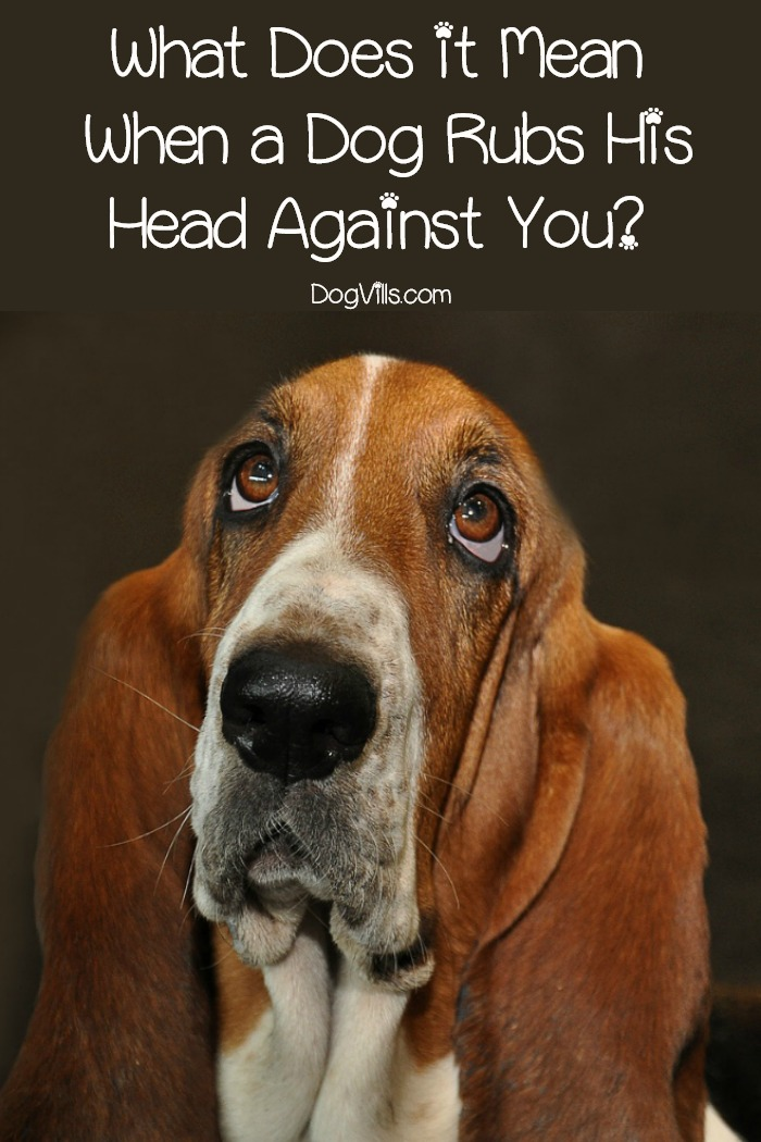 What Does it Mean When a Dog Rubs His Head Against You?