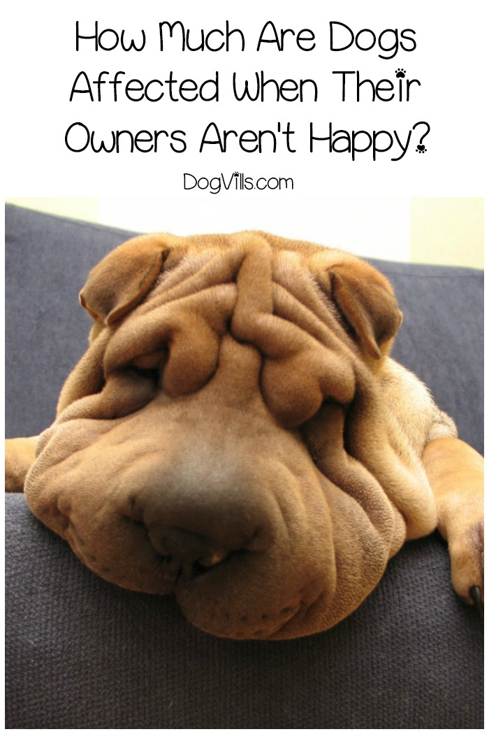 Are Dogs Affected When Their Owners Aren't Happy?
