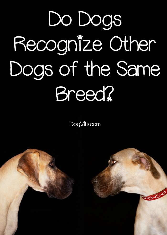 Do Dogs Recognize Other Dogs of the Same Breed?