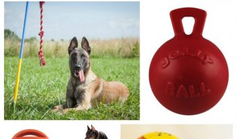 Now that summer is finally here, I'm looking for some new outdoor dog toy ideas to buy my pups! If you want to surprise Fido with some new play things, too, read on for our favorites!