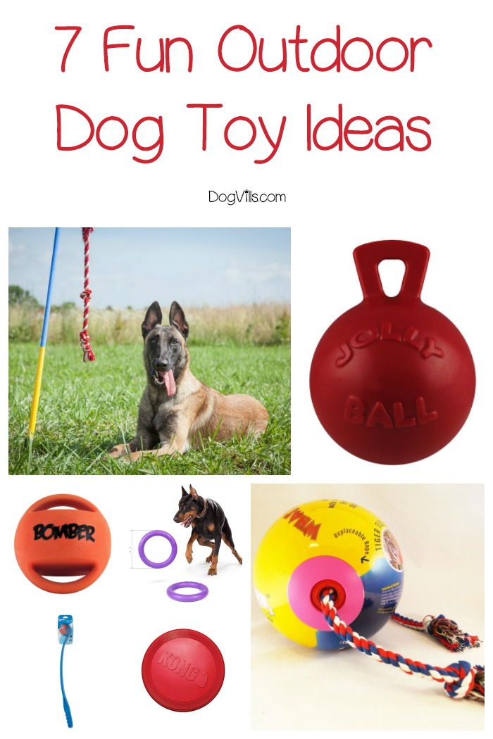 7 Exciting Outdoor Dog Toy Ideas to Buy Your Pup Now