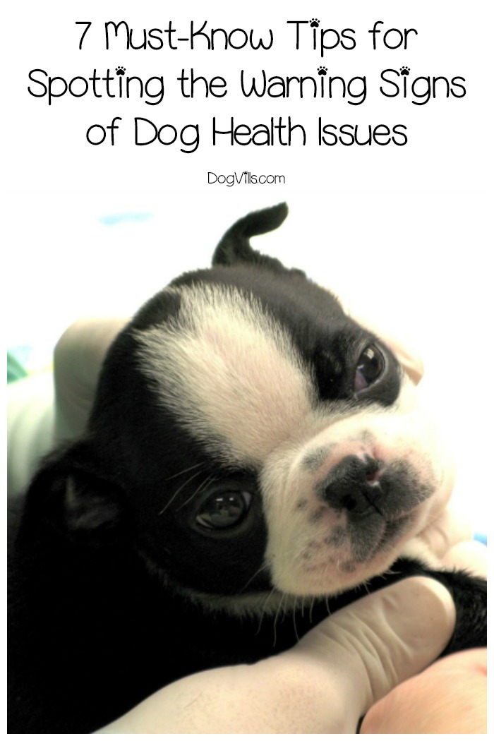 7 Must-Know Dog Health Warning Signs