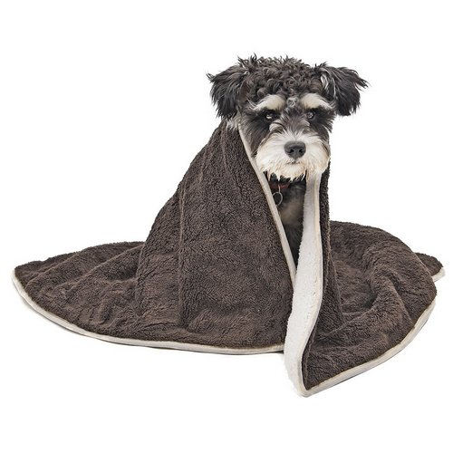 PAWZ Road Dog Blanket