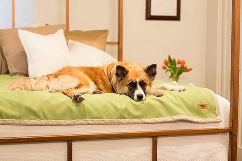 Best Dog Blankets West Paw Blanket