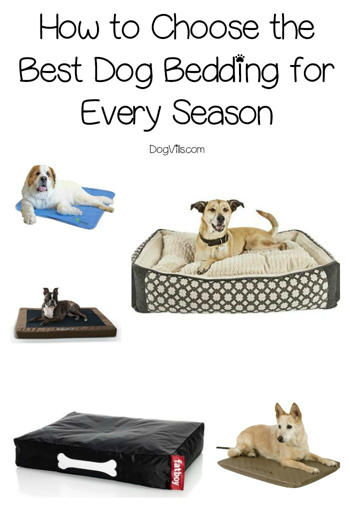 15 Best Dog Beddings for All Seasons (Complete Guide)