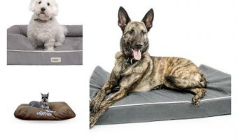 Find the best dog beds for chewers is a bit more difficult than choosing bedding for a relatively mellow dog! You need something that can really hold its own against your canine's pointy canines! We'll tell you how to choose the best dog beds for chewers, plus check out our top picks across different categories!