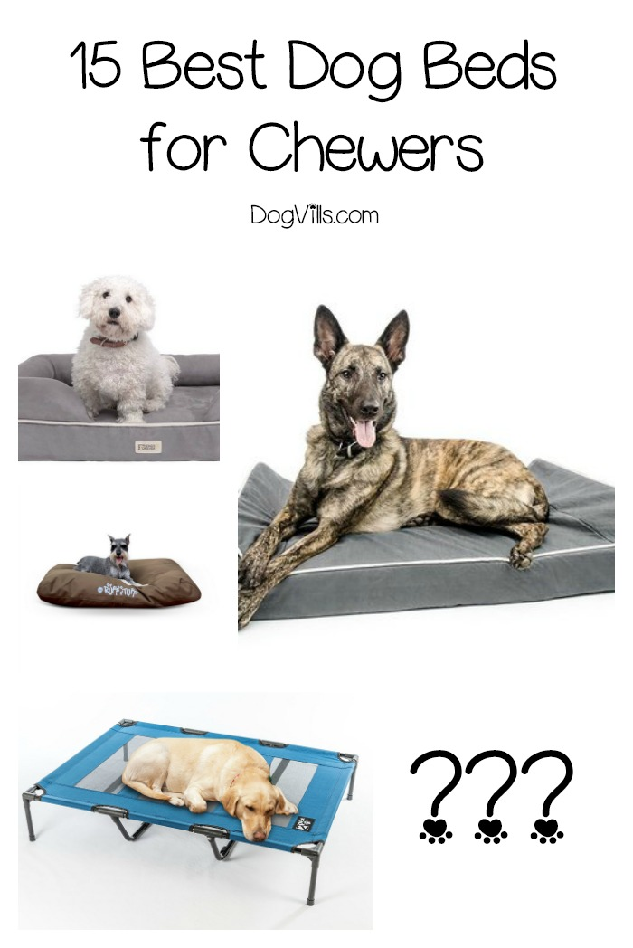 15 Best Dog Beds for Chewers
