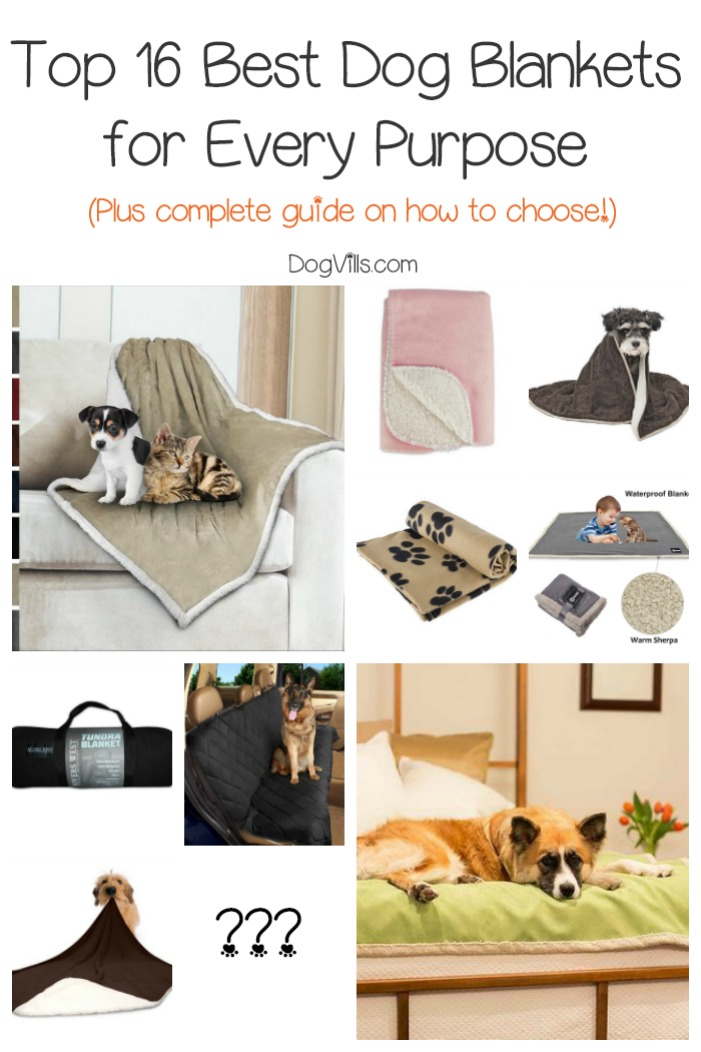 Top 16 Best Dog Blankets (Complete Guide)