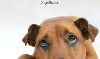 How does a breakup affect a dog? That depends on a lot of circumstances! We'll cover the major ones and help you make the transition easier on Fido! Check it out!
