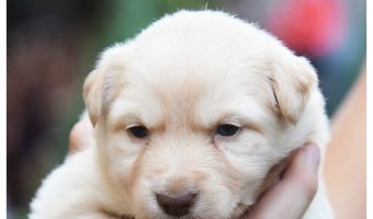 10 Adorable New Puppy Announcement Ideas