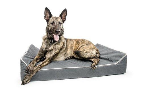 Titan Dog Bed
