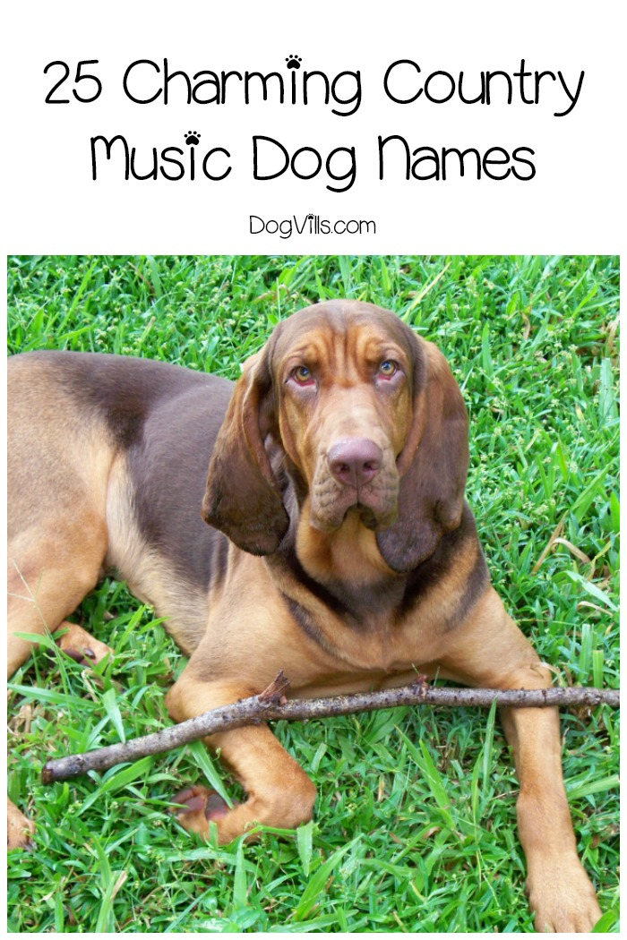 25 Charming Country Music Dog Names