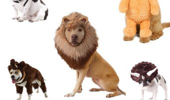 Looking for the cutest animal dog costumes for Halloween? Read on for some of our favorite animal dog costumes, plus fun facts about each species!