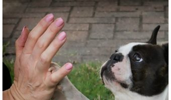 One thing all new puppy parents want to know is how to train a dog to shake hands! I think it's one of the cutest things a dog can do, and the process is very simple! Read on for the 6 steps to teaching your dog to shake!