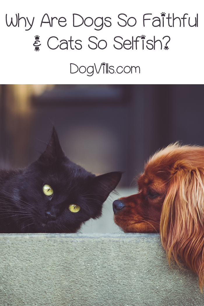Why Are Dogs So Faithful and Cats So Selfish?