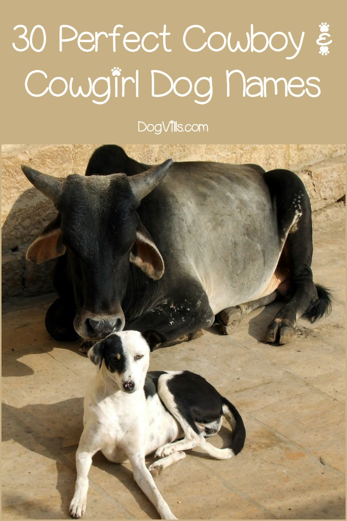 30 Perfect Cowboy and Cowgirl Dog Names