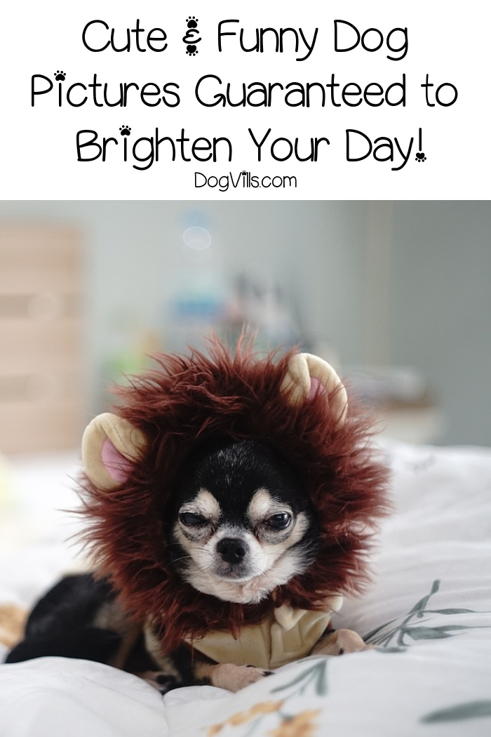 These Cute & Funny Dog Pictures Are Guaranteed to Brighten Your Day