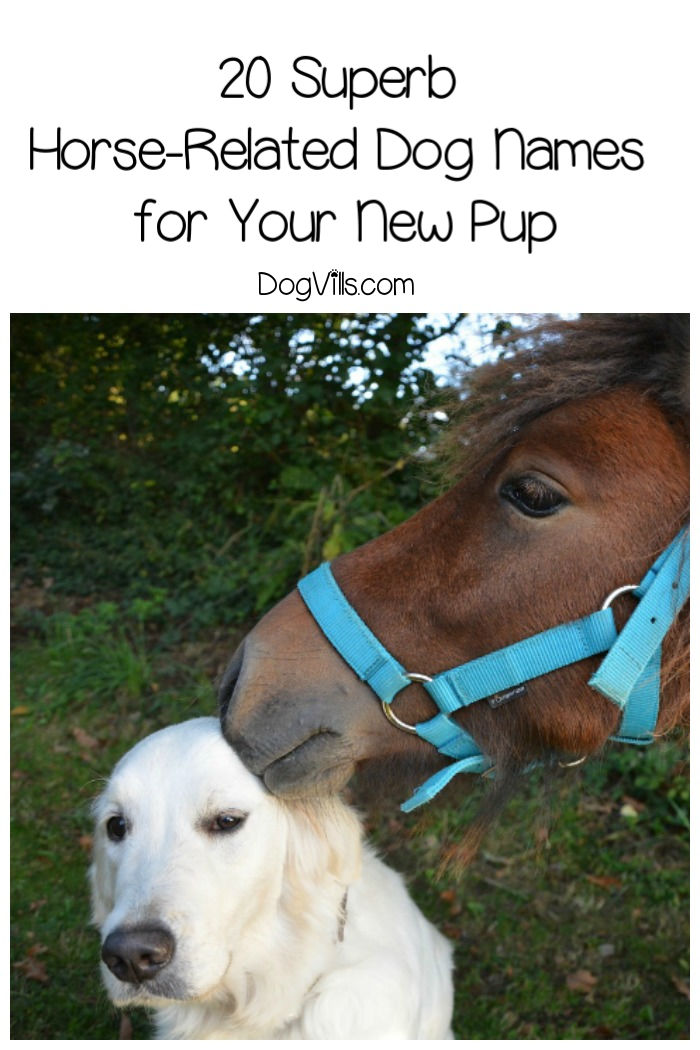 20 Superb Horse-Related Dog Names for Your New Pup