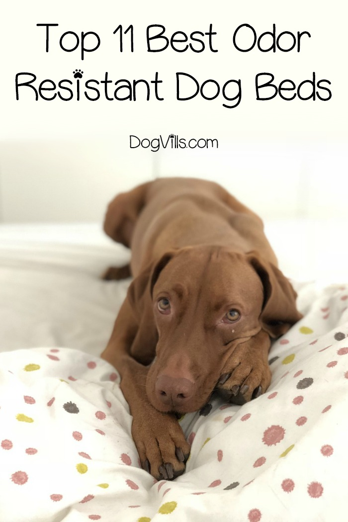 Top 11 Best Odor Resistant Dog Beds