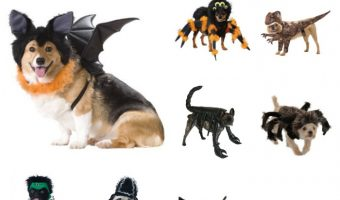 Want to dress your pups up in some scary Halloween dog costumes this year! We've got you covered! Don't miss these 10 frighteningly adorable costumes for dogs!