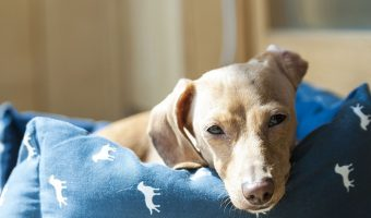 If you're the owner of a senior dog who has a tough time getting comfortable, you'll want to check out one of these top 5 best dog beds for older dogs!