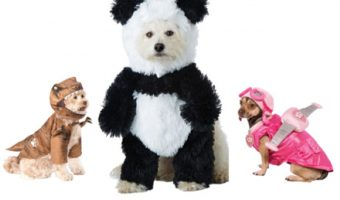 This year is probably going to be the best ever for your dog, because there are an array of new Halloween dog costumes out! From superhero costumes to epic hilarious ensembles, there's something for every dog lover here!