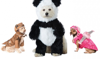 8 Adorable New Halloween Dog Costumes for 2018