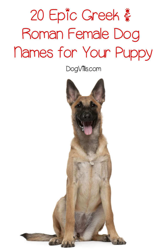 20 Epic Roman & Greek Female Dog Names