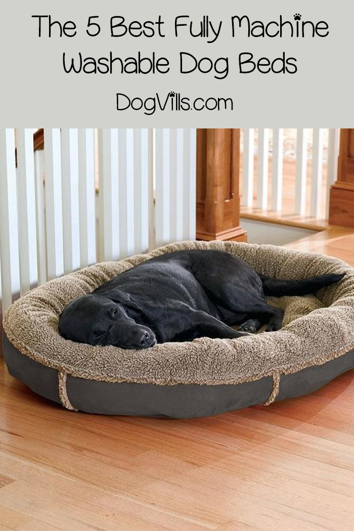 The 5 Best Fully Machine Washable Dog Beds