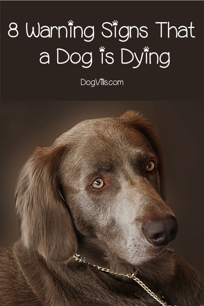 8 Warning Signs That a Dog is Dying