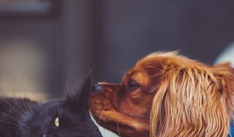 Why is your dog licking your kitten like crazy? While this behavior can be a bit freaky, there's actually a sweet reason behind it! Find out what it is, along with tips on helping cats and dogs get along.