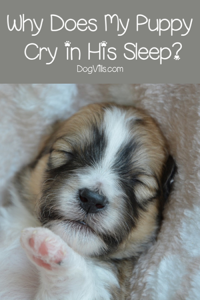Why Does My Puppy Cry in His Sleep?