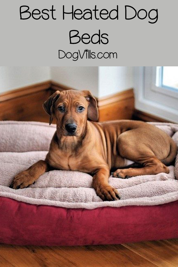 Top 15 Best Heated Dog Beds
