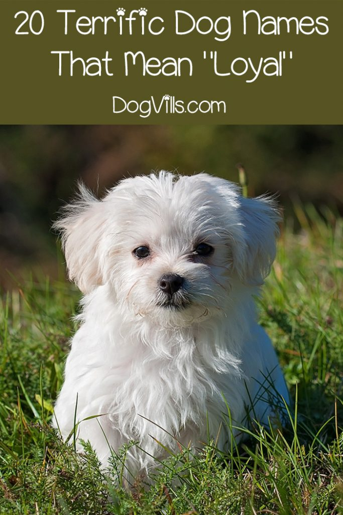 59 Fantastic Dog Names That Mean Loyal - DogVills