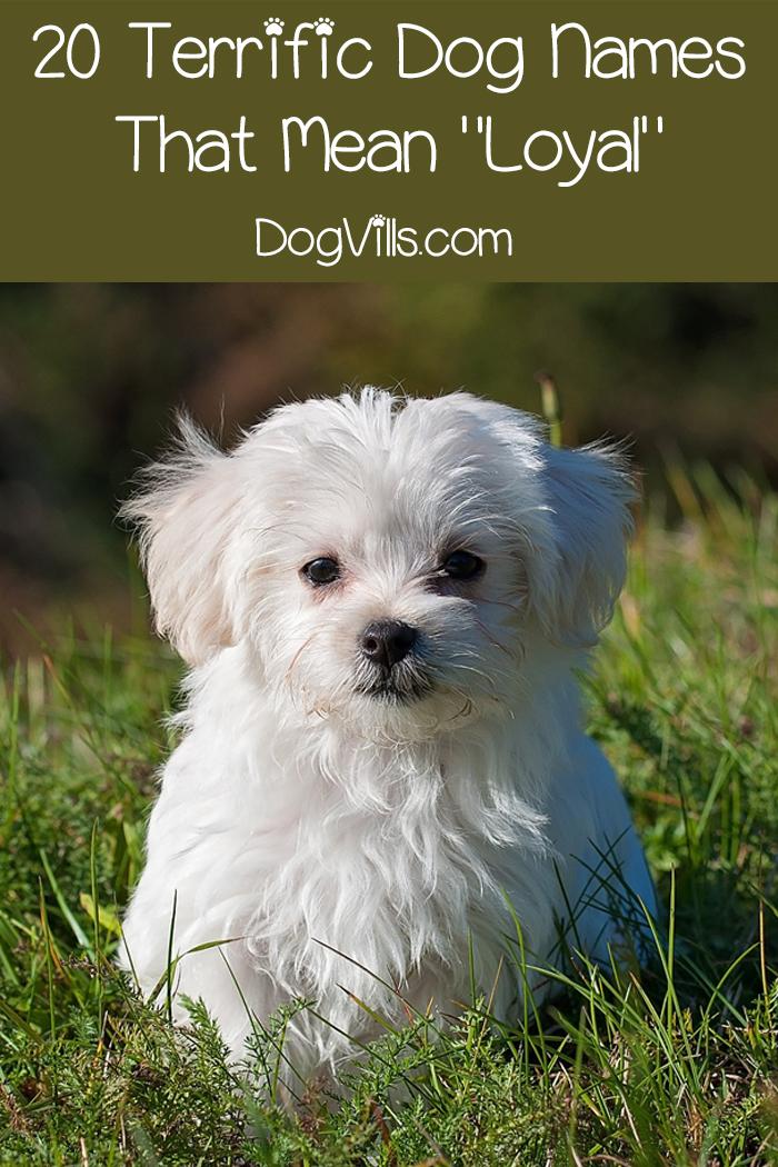 59 Fantastic Dog Names That Mean Loyal