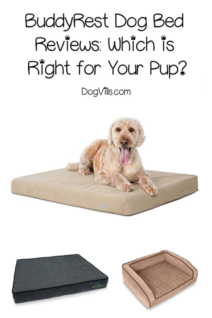 BuddyRest Dog Bed Reviews: Which One is Right for Your Dog?